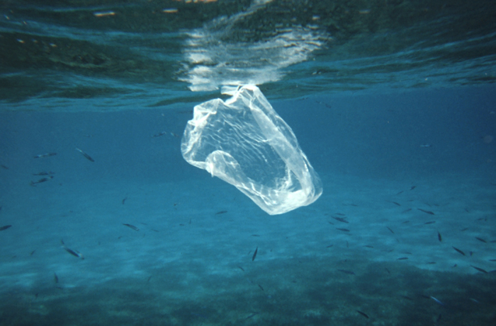 Floating Plastic Debris